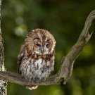 Owl Perched On Branch Poster Photo Print 32x24