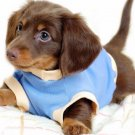 Puppy In Blue Shirt Poster Photo Print 32x24