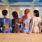 Pink Floyd Albums Art Hot Girls Body Art Print POSTER 32x24