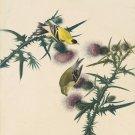 John James Audubon American Gold Finch Fine Art Print 32x24