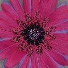 Wild Flowers - Pink leopard print bloomin pens