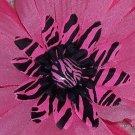 Wild Flowers - Pink zebra print bloomin pens