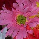 12 PINK Bloomin' Pens - Gerbera Daisy flower pens