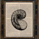 Shell Art Print on Antique Book Page Vintage Illustration