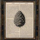 Pine Cone Art Print on Antique Book Page Vintage Illustration Botanical