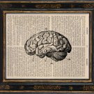 Human Brain Art Print on Antique Book Page Vintage Illustration Medical Anatomy