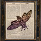 Moth Insect Print on Antique Book Page Vintage Illustration