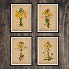 Yellow Flowers Antique Print Set of 4 Wall Art Home Decor