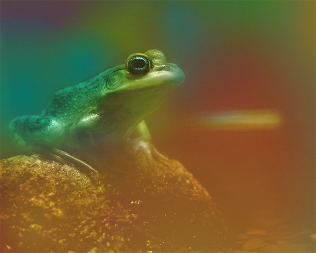 Frog, 4x6 photograph