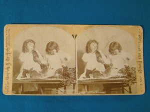 Griffith Our Pet Bunnies stereoview stereoscope card antique 1894 Victorian children photo W. H. Rau
