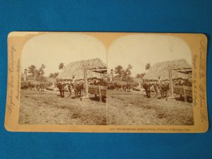 Havana Cuba farming scene stereoview stereograph stereoscope card 9072 Keystone View antique 1898