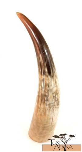 Product ID: 153     Full Sized Cow Horn