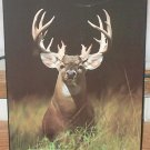 Deer Picture