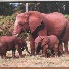 Elephant_Picture