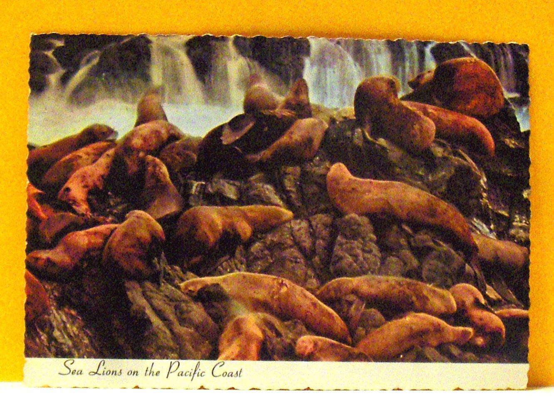 VINTAGE - Postcard Sea Lions on the Pacific Coast