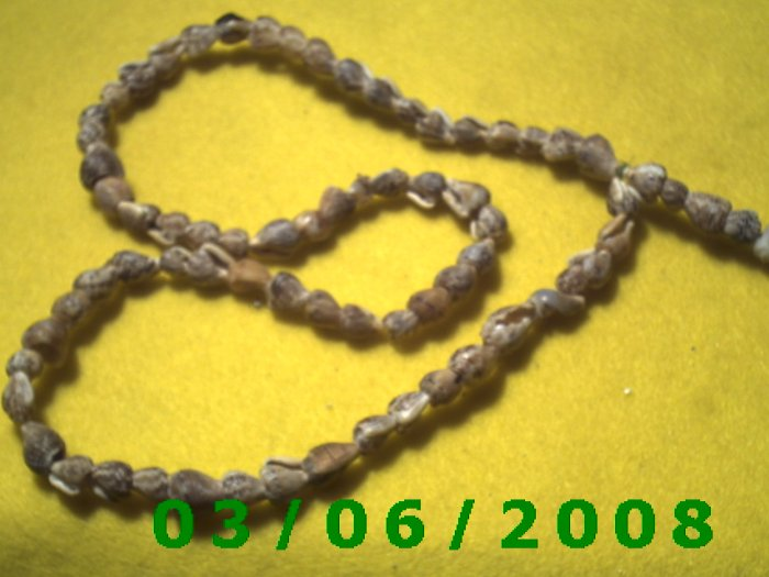 """23"""" Shell Necklace (007)"""