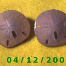 Sand Dollar Pierced Earrings     Q1016