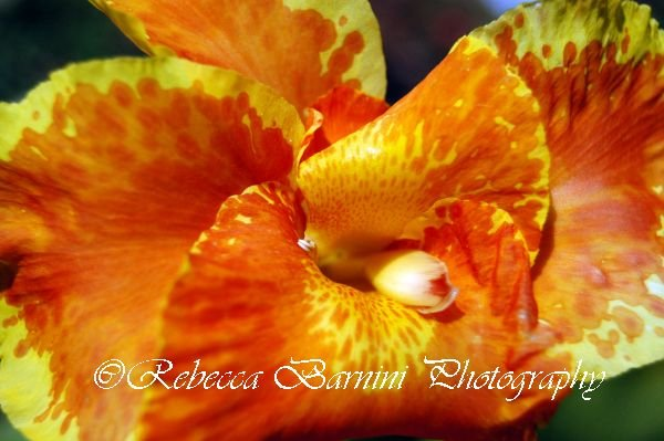 Flowers -photographic prints