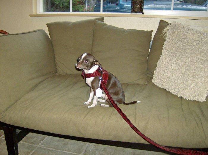 Doggie Vest