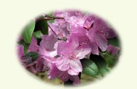 Azalea blooms on notecards