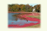 cranberry harvest image on notecards