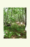 woodland trail, image on notecards