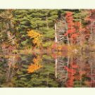 colorful foliage reflections on notecards