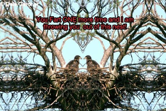 Two Bald Eaglets in the Nest Item 001, 20 x 30 Print