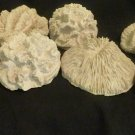 Immitation Coral (7 pieces) Well Detailed