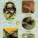 A Step - By-Step Book  about Tortoises