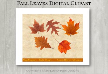 Assorted Brown Fall Leaves Clipart Digital Leaf PNG Realistic Fall Leaf Graphics Printables