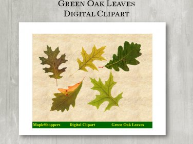 Green Oak Leaf Clipart Digital Leaf PNG Digital Images Realistic Maple Leaf Graphics Printables