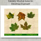 Green Maple Leaf Clipart Digital Leaf PNG Digital Images Realistic Maple Leaf Graphics Printables