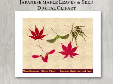 Japanese Maple Leaves Clipart Digital Leaf PNG Realistic Fall Leaf Graphics Printables