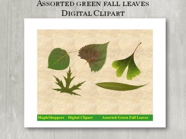 Assorted Green Fall Leaf Clipart PNG Digital Images Realistic Fall Leaf Graphics Printables