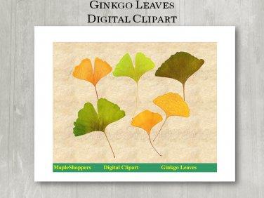 Ginkgo Leaf Clipart Digital Leaf PNG Digital Images Realistic Ginkgo Leaf Graphics Printables