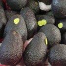 avocado 20 kilo