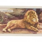 ANTIQUE 1937 AFRICAN LION WILD ANIMALS TOBACCO CARD