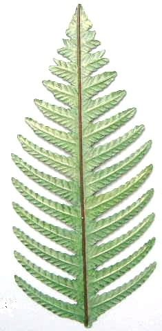 Fern Leaf  Large | Refrigerator Magnet | Handpainted Magnets | Plant Magnets