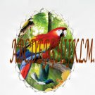PARROT BIRD WITH FLOWER HUMMINGBIRD CAMEO PORCELAIN PENDANT PIN BROOCH