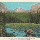 Union Pacific Railway Postcard - 1931 - Lily Pond