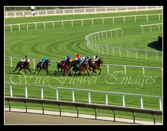 Arlington Park Final Turn Thoroughbred Horse Racing - 8 x 10