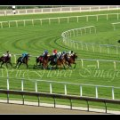 Arlington Park Final Turn Thoroughbred Horse Racing - 8 x 10