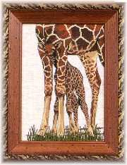 Framed Giraffe Picture