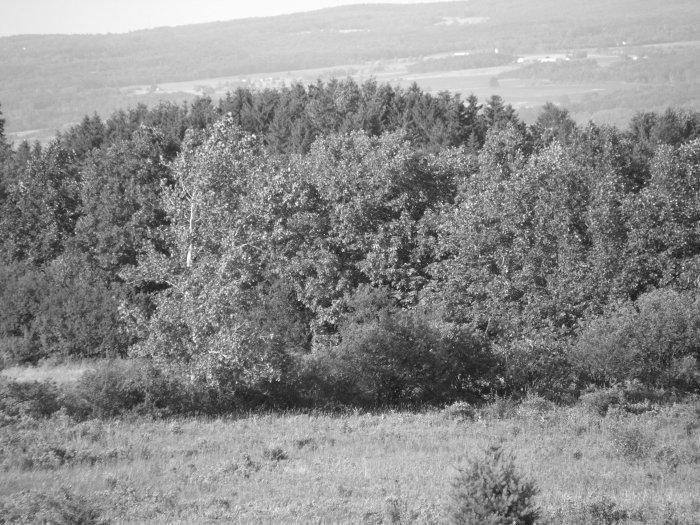gray trees