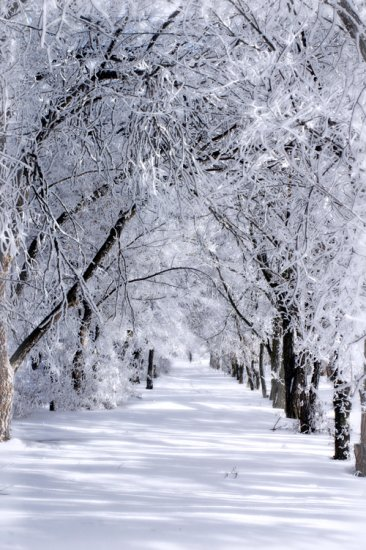 Winter Wonderland 8x10 Photo Print (Unframed)