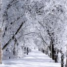 Winter Wonderland 8x10 Photo Print (Unframed)