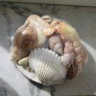 Loose Seashells
