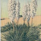 YUCCA IN BLOOM ON THE DESERT LINEN POSTCARD #132 USED 1946