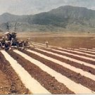 LAYING MULCH PAPER HAWAII PICTURE POSTCARD #143 UNUSED